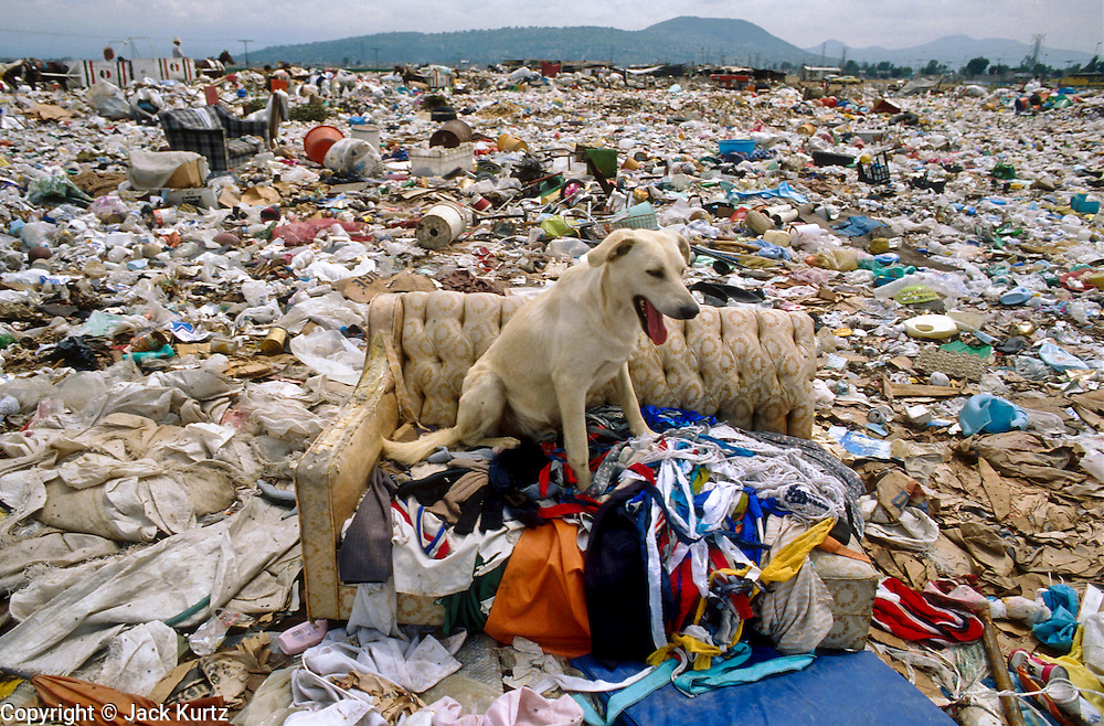 CIUDAD NEZAHUALCOYOTL, DF, MEXICO: A dog sits in an abandoned couch at the Ciudad Nezahualcoyotl dump on the edge of Mexico City. Hundreds of people live in the dump and make a living by scavenging through the refuse brought to the dump by Mexico City's garbage trucks. PHOTO ©  JACK KURTZ   POVERTY  HOMELESS  ECONOMY   SOCIAL ISSUES   ANIMALS