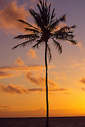 Palm tree at sunset<br />