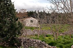 Cassano delle Murge - Foresta Mercadante, Aprile 2013.La foresta Mercadante si estende su 1300 ha (dagli iniziali 1041ha), e si trova per gran parte nel territorio di Cassano delle Murge (872 ha) e per la parte restante nel territorio di Altamura. La foresta fa parte integrale del Parco dell'Alta Murgia. In seguito alla ripresa demografica e alla deforestazione dell'Ottocento i danni ambientali nell'entroterra barese incominciarono a farsi sentire direttamente sulla città di Bari che in più occasioni venne allagata. Si ricordano in particolare tre alluvioni 1905 (18 morti), 1915, 6 novembre 1926 (19 morti e 50 feriti)..A causa dell'erosione il suolo era spoglio e povero e quindi furono utilizzate per la maggior parte conifere (in particolar modo pino d'aleppo) in quanto piante a rapido accrescimento e idonee a predisporre il suolo per le specie autoctone quali roverelle e lecci (latifoglie - specie quercine).