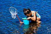 Girl exploring the shallow water with net and bucket, Orleans, Cape Cod