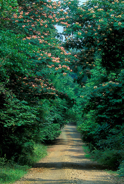 Stock photo of a dirt road running through a forested area