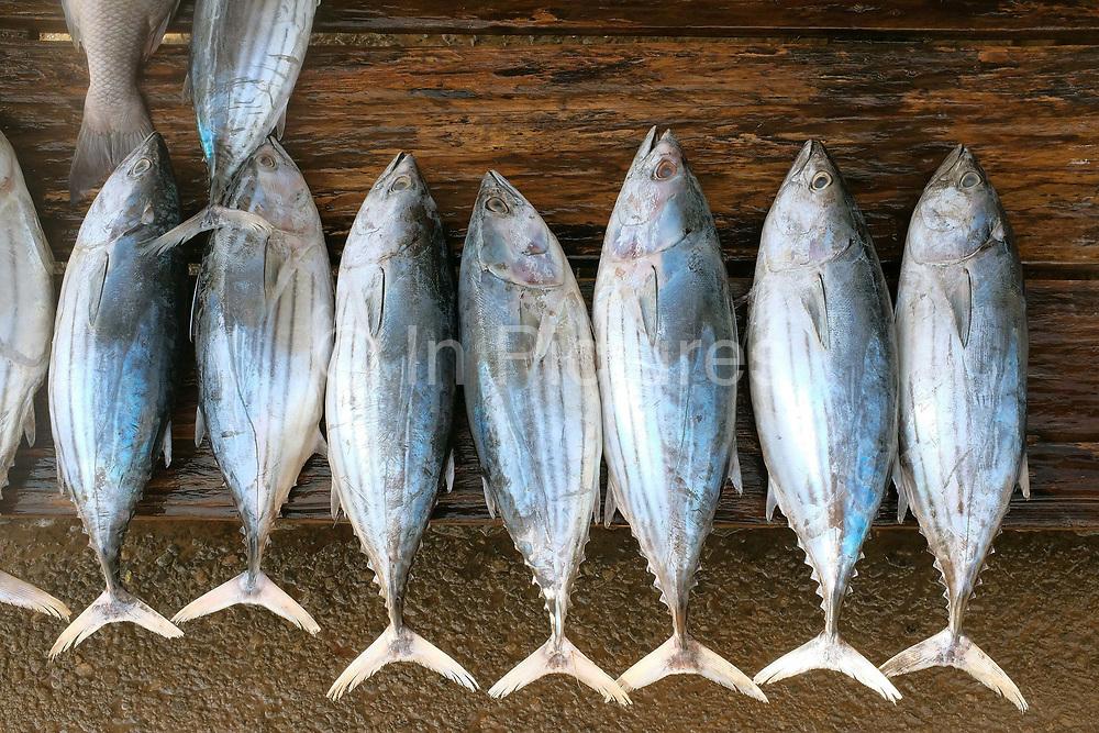 Fresh tuna fish for sale on a roadside stall along the south coast of Sri Lanka on 17 April 2016