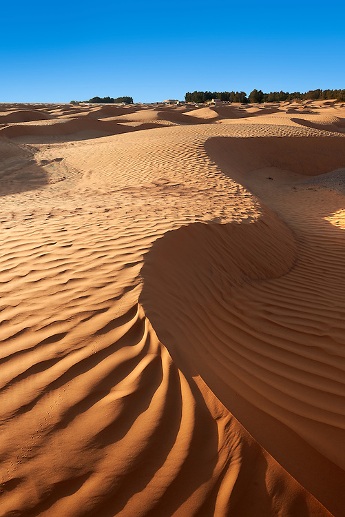 The Sahara desert sand dunes of Erg Oriental near the oasis of Ksar Ghilane, Tunisia, Africa<br /> <br /> Visit our TUNISIA HISTORIC PLACES PHOTO COLLECTIONS for more photos to browse or download or buy as prints https://funkystock.photoshelter.com/gallery-collection/Pictures-Images-Photos-of-Tunisia/C0000lMpN5pUP1CM