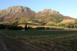 Feb 27, 2006; Stellenbosch, SOUTH AFRICA; Vineyards in Stellenbosch, South Africa. Stellenbosch is the capital of the Cape Winelands and was the second town to be founded in South Africa in 1685. A main tourist attraction of the Western Cape, Stellenbosch boosts over 200 estates that offer wine tastings (Credit Image: © Krista Kennell/ZUMAPRESS.com)