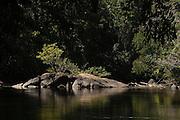 Rewa River<br /> Rainforest<br /> GUYANA. South America