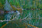 Fallen trees in small lake in the boreal forest<br />Lake Superior Provincial Park<br />Ontario<br />Canada
