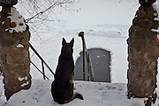 Moscow, Russia, 01/01/2005..Stray dog and bathing hole in the ice in Lefortovo Park on New Year's Day.