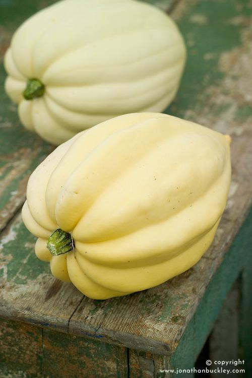 Pumpkin 'Swan White' - Acorn squash. Cucurbita