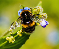 Bees collect pollen from wild flowers in an English countryside near Stratford upon Avon photo by Mark Anton Smith