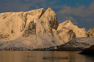 Early morning light on the mountains surrounding Reinefjord, in winter, from Olenilsoy, Moskenesoya, Lofoten Islands, Arctic Norway