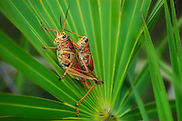 Summer love in the CREW Marsh Hiking Trails in SW Florida.