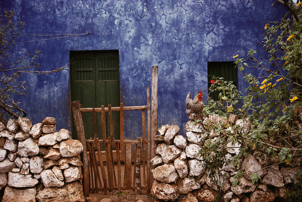 Stone wall and gate with rooster in front of a blue house in Bolonchen de Rejon, outside Campeche, Mexico.