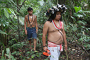 Surui indians carrying Timbtrack technology inside Surui territory primary rainforest interior.<br /><br />An Amazonian tribal chief Almir Narayamogo, leader of 1350 Surui Indians in Rondônia, near Cacaol, Brazil, with a $100,000 bounty on his head, is fighting for the survival of his people and their forest, and using the world's modern hi-tech tools; computers, smartphones, Google Earth and digital forestry surveillance. So far their fight has been very effective, leading to a most promising and novel result. In 2013, Almir Narayamogo, led his people to be the first and unique indigenous tribe in the world to manage their own REDD+ carbon project and sell carbon credits to the industrial world. By marketing the CO2 capacity of 250 000 hectares of their virgin forest, the forty year old Surui, has ensured the preservation, as well as a future of his community. <br /><br />In 2009, the four clans and 25 Surui villages voted in favour of a total moratorium on logging and the carbon credits project. <br /><br />They still face deforestation problems, such as illegal logging, and gold mining which causes pollution of their river systems