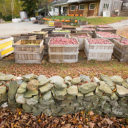 A stone wall and bins of organic apples at Miller Orchards in East Dummerston, Vermont.  Connecticut River Valley.