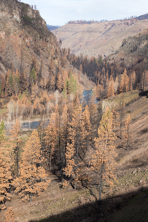 The Wenaha River in Northeast Oregon.  This area burnt in the Grizzly Complex Fire the prior year.