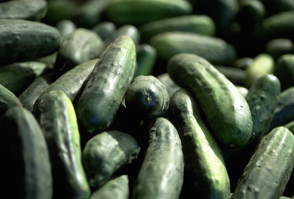Close up selective focus photograph of a pile of Kirby Cucumbers