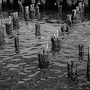 This is what's left from a pier in Gloucester, MA.  I like how the rows of pilings align in several ways along with some very interesting reflections in the water.  This black and white version really brings out some of those details.