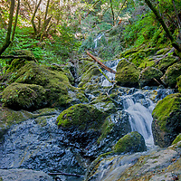 Cataract Creek pours between moss, ferns and lush undergrowth on the northwest slopes of Mount Tamalpais in Marin County, California.