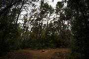 Path divides - Parc de Collserolla, Sant Cugat del Valles, Barcelona, Spain.