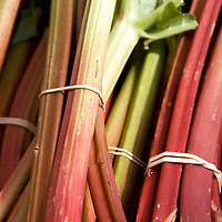 Bundles of fresh rhubarb at a late spring farmers market.