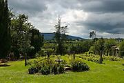 Vines at Longueville House, Mallow, Cork, Ireland.