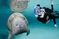 Florida manatee, Trichechus manatus latirostris, a subspecies of the West Indian manatee, endangered. A female snorkeler is observing a manatee on a cool Florida day. The manatee is curious about the camera. Facing forward towards viewer. Horizontal orientation and polite, passive observation. Three Sisters Springs, Crystal River National Wildlife Refuge, Kings Bay, Crystal River, Citrus County, Florida USA.