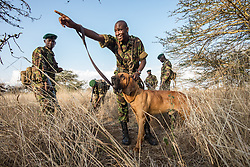 The Lewa Wildlife Conservancy serves as a refuge for endangered species and is known for its 150 well-trained and highly motivated force of security personnel, who are deployed to incidents of poaching, cattle rustling, road banditry, robbery and any occurrences affecting peace and prosperity in the area.