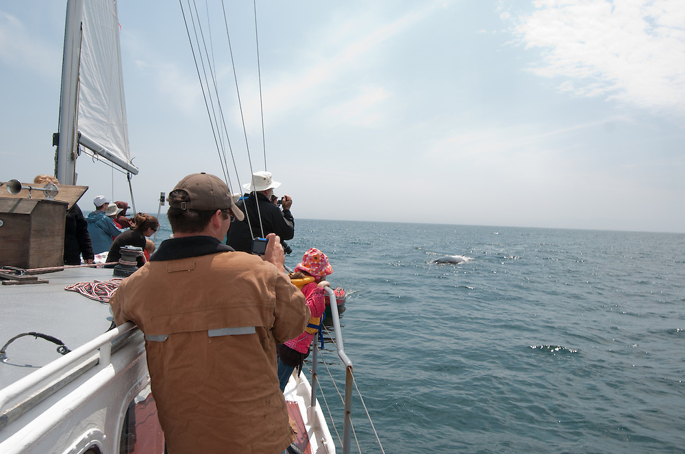 Whale watching with Whales-n-Sails off Grand Manan Island, New Brunswick, Canada. Photo by William Drumm.