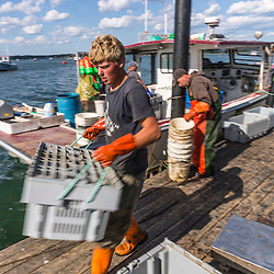 'Miss Carol', captain Frank Smith (Right) and wharf employee Carl Pottle unload lobster at Great Wass Lobster in Beals, Maine.