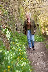 Carol Klein with primroses growing on a bank in a Devon hedgerow. Primula vulgaris