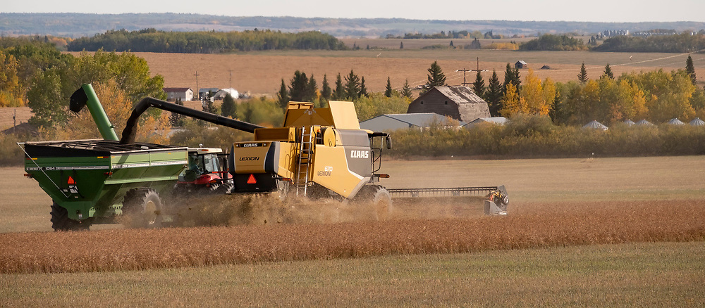 Photo Randy Vanderveen<br /> Grande Prairie, Alta. <br /> A canola crop is straight combined at Scenic Heights Farm south of LaGlace on the first full day of fall Thursday, Sept. 23. According to Shayla Richards, operator of the tractor with grain wagon and whose parents Dan and Kim operate the farm, there had been a bit of a break between harvesting  the wheat and canola crops and the canola.