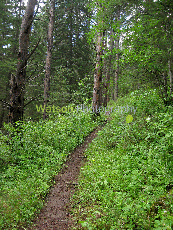 The Wooded Path