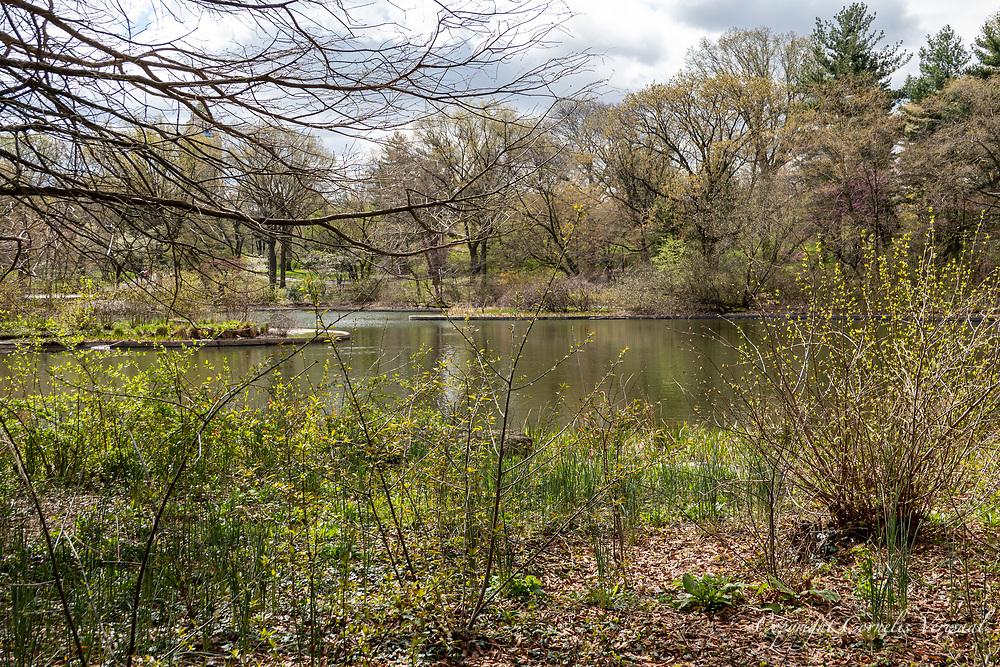 Central park, April 16, 2021