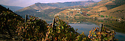 PORTUGAL, DOURO RIVER vineyards in Port Wine area