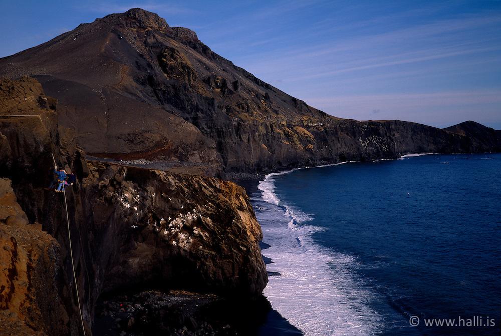 Grindavíkurbjarg menn að síga bjargið /Men are hanging in the cliffs near Grindavik
