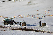 Two sheep farmers bring fodder to their sheep out in the fields on 23rd of January 2021, Scottish Borders, United Kingdom. During winter time, when the ground is covered with snow the sheep rely on fodder provided by the farmer. They use a tractor to bring bales of hay to their flock. The field is above the village Stow, near Galashields.