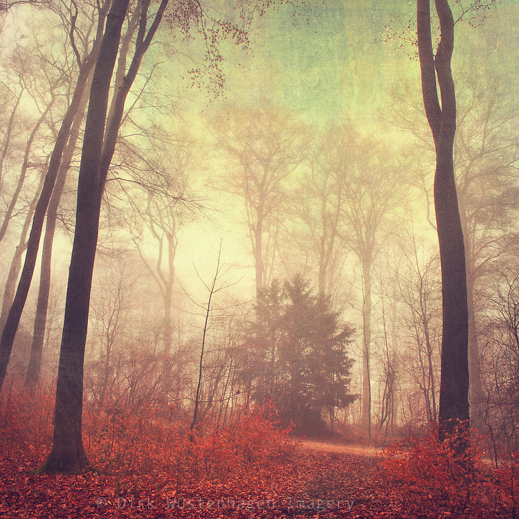 Moody forest scenery<br /> Texturized photograph<br /> Prints & more: http://society6.com/DirkWuestenhagenImagery/the-way-out-jcX_Print
