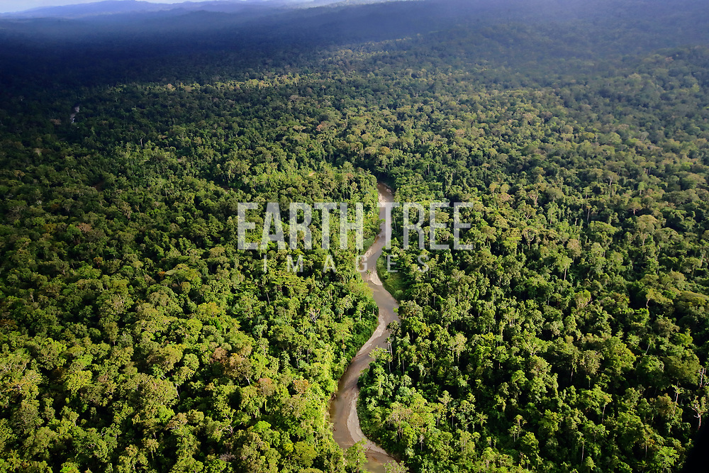 Tropical forst, Papua Province, Indonesia, 20th January 2020. Illegal forest clearing, making way for palm oil expansion. Papua, Indonesia
