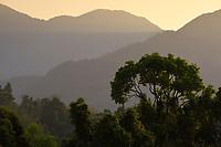 Rainforest at the morning at Tongbiguan nature reserve, Dehong prefecture, Yunnan province, China