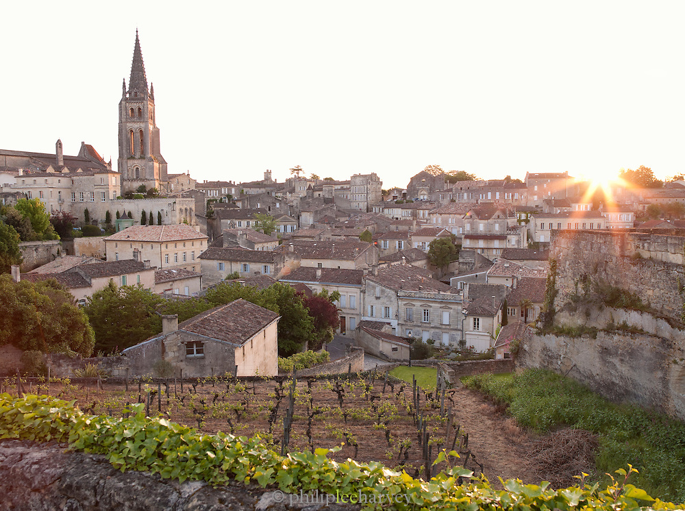 A vineyard overlooking the church and town of Saint Emilion, France