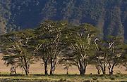 Ngorongoro Crater,Tanzania