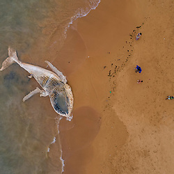 Encalhe de Baleia-jubarte (registro) fotografado na cidade de Serra, no Espírito Santo, Sudeste do Brasil. Oceano Atlântico. Registro feito em 2019.<br /> ⠀<br /> ⠀<br /> <br /> <br /> <br /> <br /> <br /> <br /> <br /> ENGLISH: Stranded humpback whale photographed in Serra City, in Espírito Santo - Southeast of Brazil. Atlantic Ocean. Picture made in 2019.