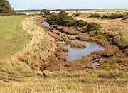 Drainage ditch wetland vegetation on marshland at Hollesley, Suffolk, England, UK
