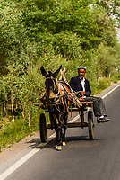 Donkey cart, south route of the ancient Silk Road, Xinjiang Province, China.