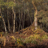 More messy woodland, Im going to keep posting them until you all beg for submission..