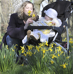 ***CORRECTED CAPTION***© under license to London News Pictures. .2011.03.07   Mum Sandra Falvey (NOT Sarah as previously published)and 18 month old daughter Eva enjoy the spring daffodils in the sunshine today (Mon) in Orpington, South London. Picture credit should read Grant Falvey/London News Pictures.