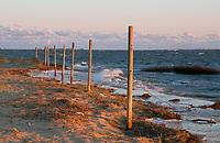 NC01388-00...NORTH CAROLINA - Wind driven waves crashing the marshy shore of Jockey's Ridge State Park on the Outer Banks at Nags Head.