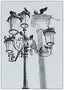 Pigeons on ornate street lamps