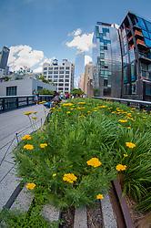 The High Line, Lower West Side, Manhattan, New York, US