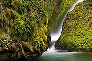 A small waterfall surrounded by moss and fern covered basalt in Oregon's waterfall-ridden Columbia Gorge.